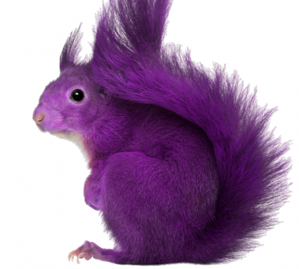 purple-squirrel2